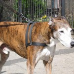 Baron, 17 years, Greyhound, near 6th and Cooper Square